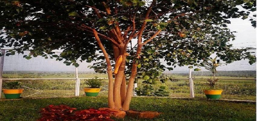 पीपल के पेड़ की सुरक्षा करते पुलिसकर्मी