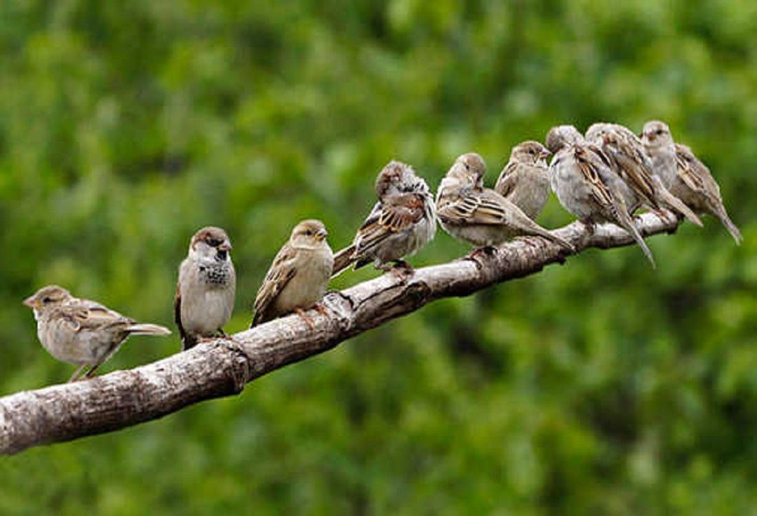 Video- ऐसा भी एक गांव जहां पक्षियों को माना जाता हैं बेटियां