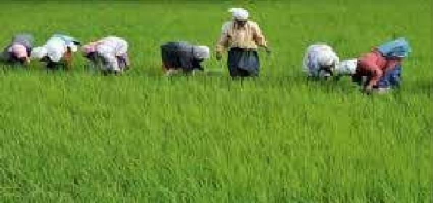 Kisan Bill 2020: लोकसभा में पास हुआ कृषि संबंधित बिल, जानें क्या है ये विधेयक और क्यों हो रहा विरोध